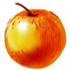 Сорт Солнцедар: яблуні, їх плоди і все для садівника про це