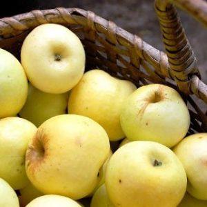 Незабутній аромат і смак плодів має яблуня Антонівка звичайна
