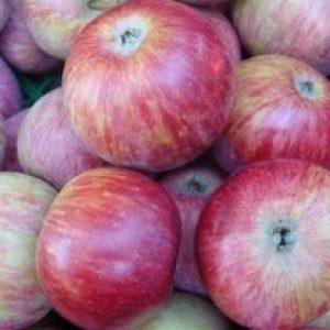 Все, що ви хотіли знати садівники про яблунях сорти Терентєвка