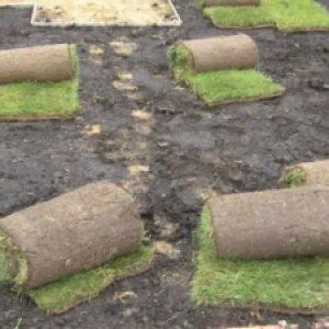 Укладання рулонного газону – озеленення ділянки своїми руками + відео
