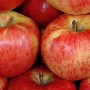 Перше місце на міжнародній виставці займала яблуня Апорт