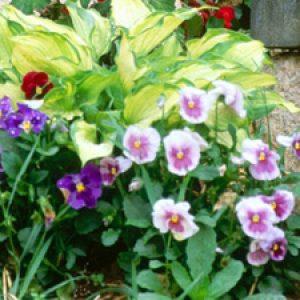 Які квіти для саду і дачі вибрати, щоб оформити клумбу? + відео