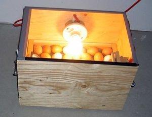 88Изготовление самодельного инкубатора