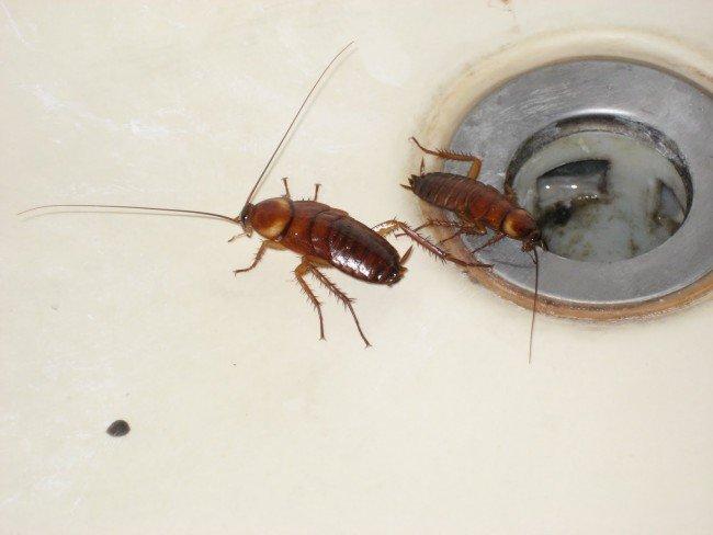 Сколько стоит морить тараканов