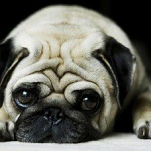 Глисти у собаки: симптоми і лікування