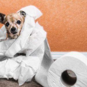 Пронос (діарея) у собаки: причини, що робити