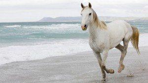 якщо сниться білий що кінь
