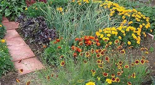 Какие цветы посадить на грядке