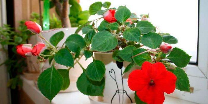 Minfei цветок Губная помада Температура изменить Цвет желе
