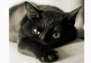 Сонник кіт який