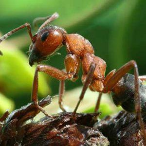 Як вивести мурах у будинку – ТОП дієвих засобів