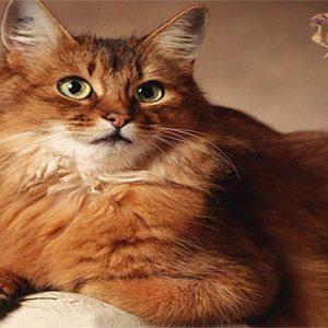 Як дізнатися чи є у кота блохи: ознаки, звідки у кішки паразити