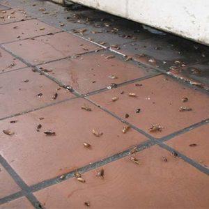 Як знищити тарганів у квартирі назавжди в домашніх умовах