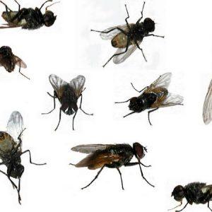 До чого сняться мухи: тлумачення снів