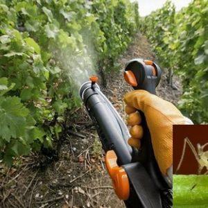 Кошти від попелиці – вибираємо ефективний інсектицид