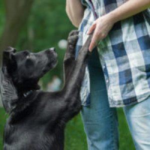 Сонник Гладити Собаку велику уві сні по голові бачити до чого