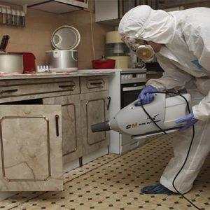 Засоби для знищення тарганів у квартирі дуже ефективні