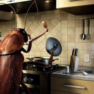 Як назавжди позбутися від тарганів у квартирі: народні і покупні засоби