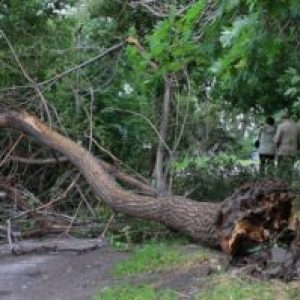 Сонник Падаючі Дерева уві сні від вітру бачити до чого сняться?