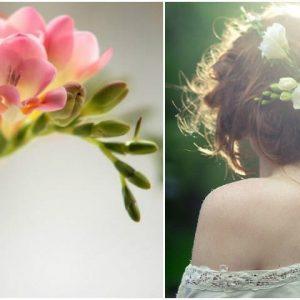 Весільний букет з фрезій: фото і варіанти поєднань