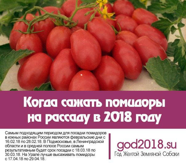 Посадка помидор на рассаду в 2018 году в сибири 70