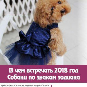 У чому зустрічати 2018 рік Собаки по знакам Зодіаку. Поради астрологів