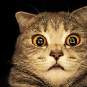 Сонник Говорить Кішка у поза бачити до чого сниться?