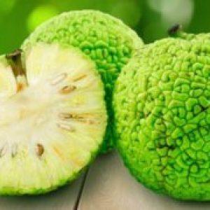 Фрукт адамове яблуко або маклюра, лікувальні властивості і застосування