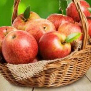 Кращі сорти яблунь: опис та фото літніх, осінніх, зимових сортів яблук