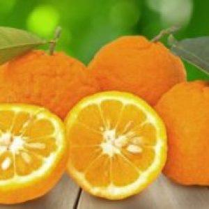 Помаранча цитрус що це таке, склад і лікувальні властивості плоду