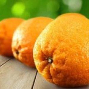Різновиди цитрусових фруктів: список і опис