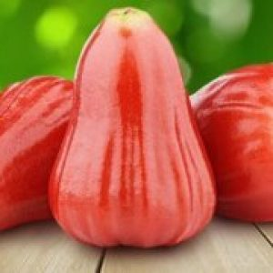 Рожеве яблуко (чомпу) корисні властивості, калорійність, де росте