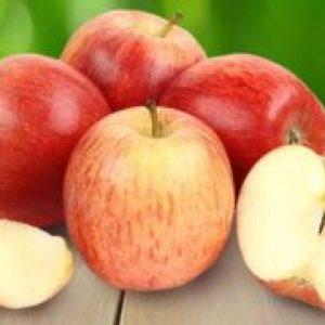Яблука Гала – опис сорту, характеристика, калорійність